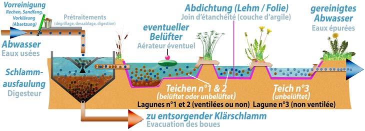 Les lagunages - Lagunage des eaux usees ...